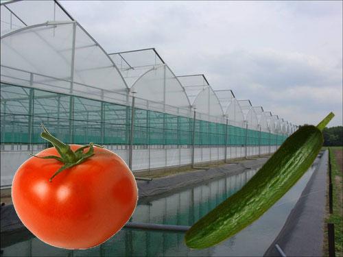 Image result for احداث گلخانه خیار گوجه بادمجان