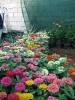دهمین نمایشگاه گل و گیاه محلات